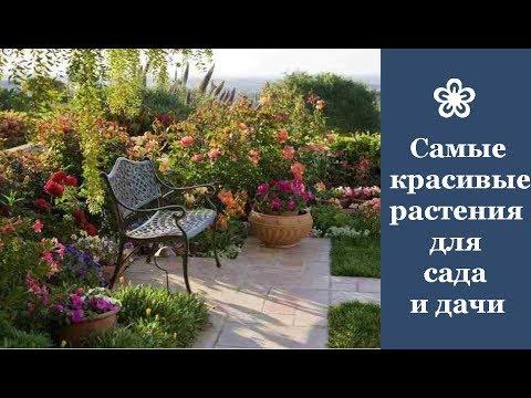 ❀ Самые красивые растения, которые стоит посадить в саду и на даче